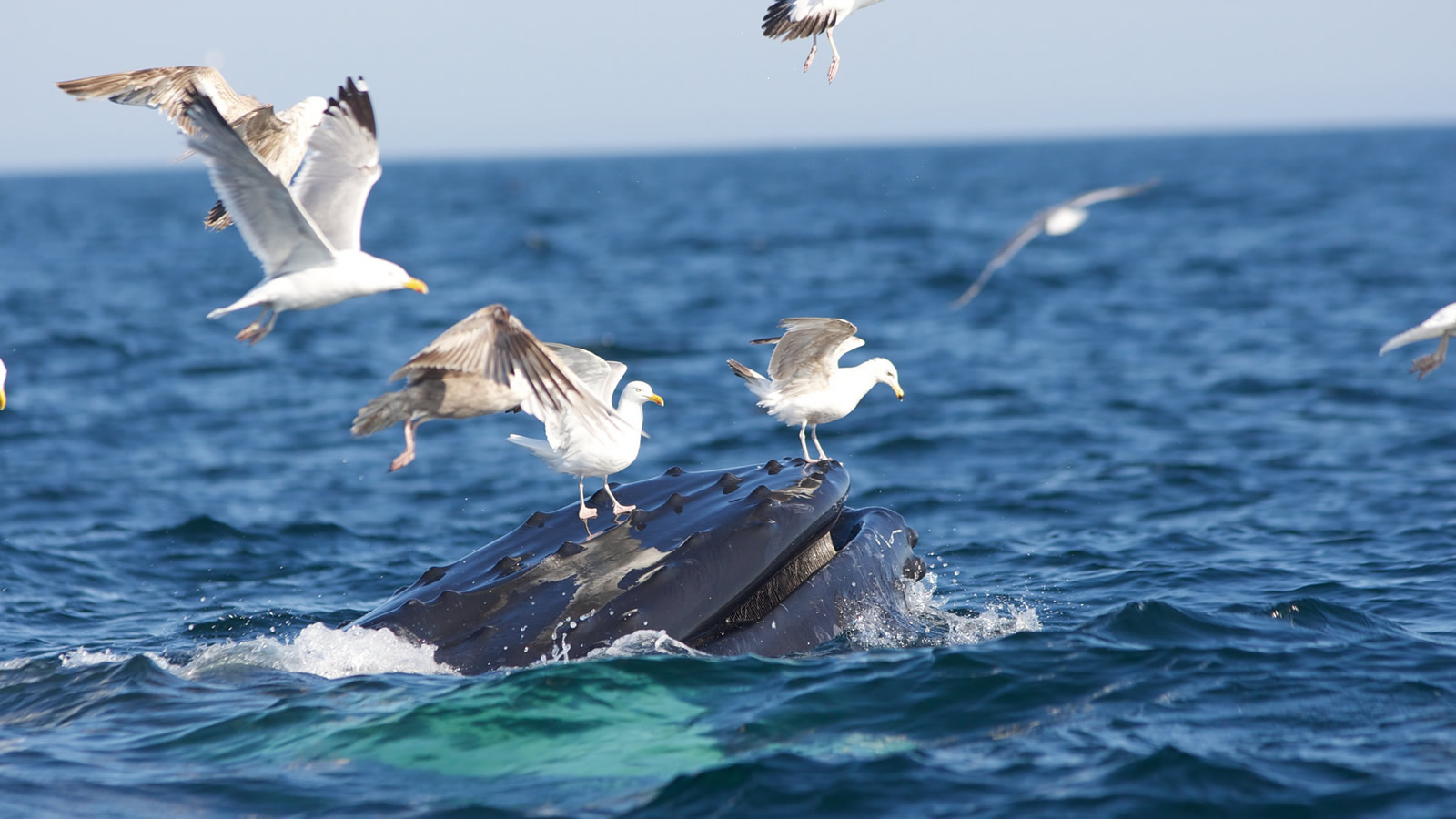 <h4>WILDLIFE OVER WASTE</h4><h5> Goal: To protect whales, dolphins, birds, fish and other water creatures from the harm of needless plastic pollution, let's ban take-out plastic foam cups and containers. </h5><em>NOAA</em>
